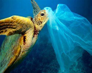 Turtle Killer plastic